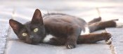 fecaloma-nel-gatto