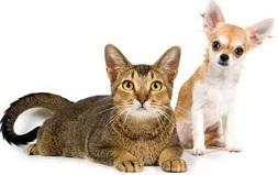 Organoterapia nel Gatto nel Cane