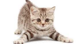 intestino-irritabile-gatto