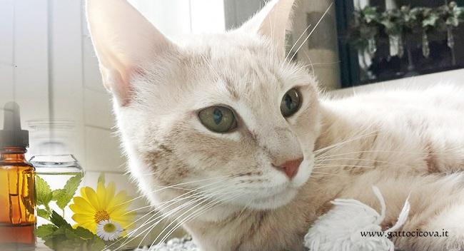 Sindrome da Intestino Irritabile nel Gatto