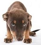 cure-naturali-per-insufficienza-renale-nel-cane