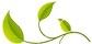 gattocicova-foglie