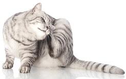 rimedi-cure-naturali-eczema-atopico-gatto