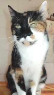 rimedi-cure-naturali-felv-gatto