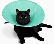 uretrostomia-gatto