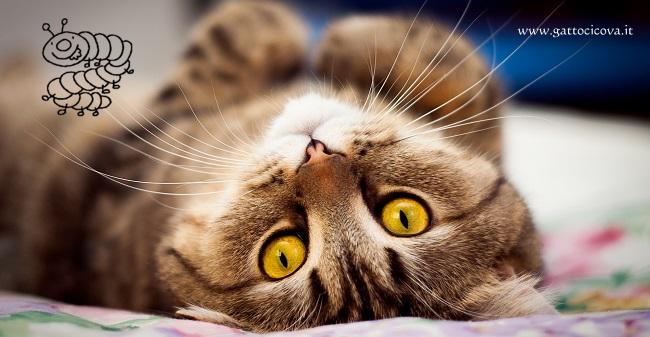 Parassiti Intestinali nel Gatto