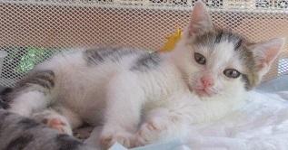 sintomi-di-gastrite-nel-gatto