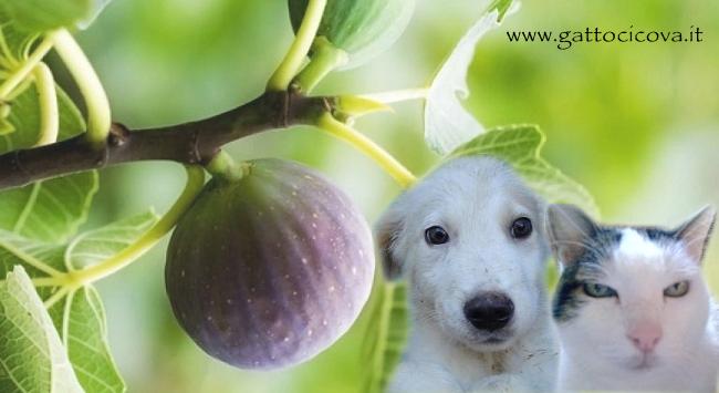 Ficus Carica nel Cane e Gatto