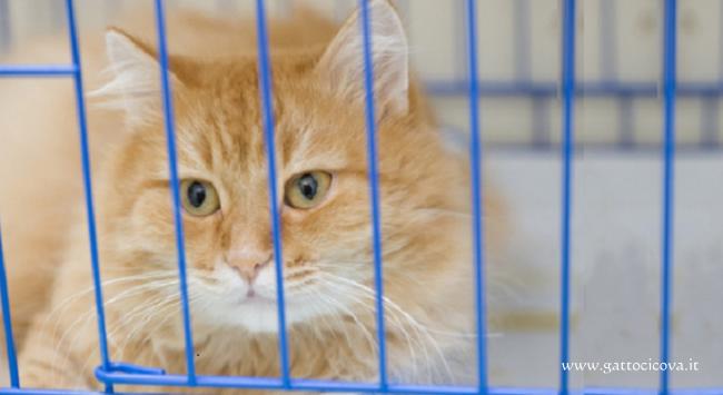 Trauma da Ospedalizzazione nel Gatto
