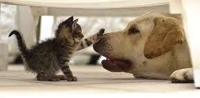 cure-naturali-giardia-gatto-cane