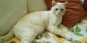 gatto-fiv