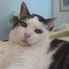 Asma del Gatto
