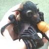 DIVO Pipistrello Neonato