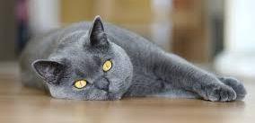 gatto-con-fibrosarcoma