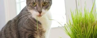 gatto-erba