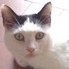Ipertiroidismo nel Gatto