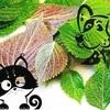 Olio di Perilla nel Gatto