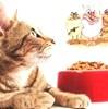 Pet Food con Micotossine