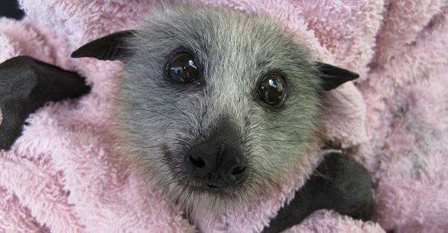 pipistrellini-neonati