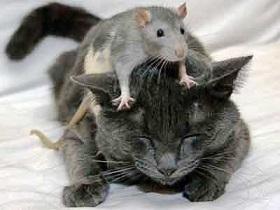 rimedi-cure-naturali-toxoplasmosi-gatto