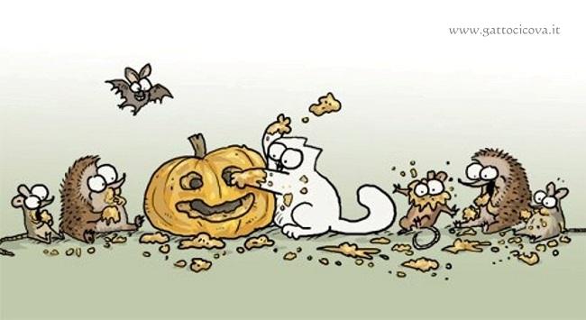 Zucca nel Gatto
