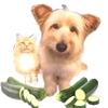 Zucchine per Gatti