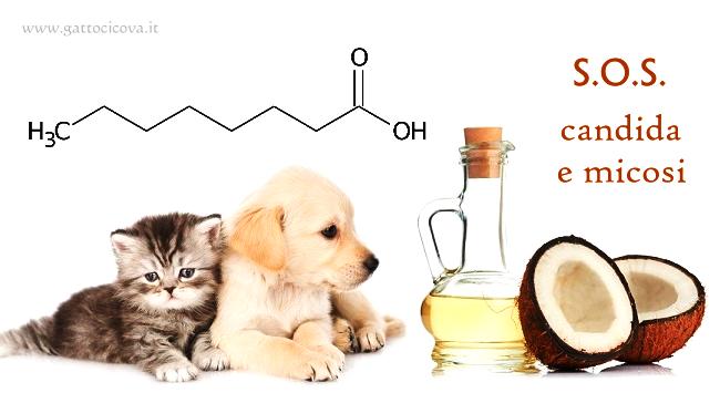 Acido Caprilico per Gatto e Cane