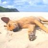 Cani e Gatti nelle Spiagge Abbruzzesi