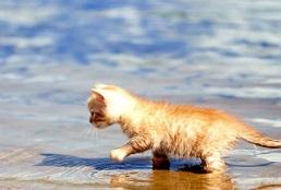cani-gatti-spiaggia
