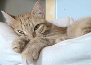 cure-naturali-depressione-gatto