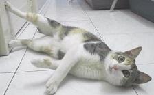 gatto-con-la-febbre