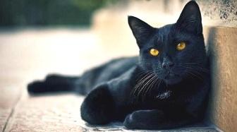 gatto-malato-di-fegato