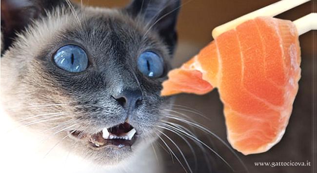Pesce nel Gatto e nel Cane