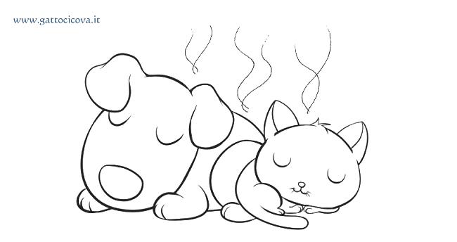 Meteorismo e Flatulenza nel Gatto e Cane