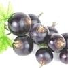 Olio di Semi di Ribes Nigrum