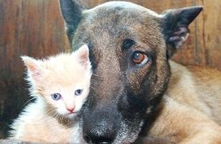 prevenzione-diabete-animali