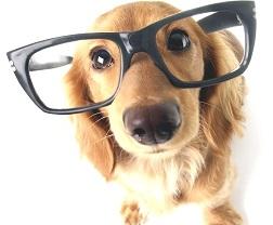 il-cane-anziano-cura-e-gestione-olistica