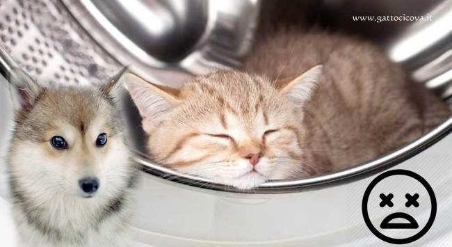 Pericoli in Casa per Gatti e Cani