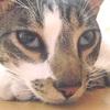 Sindrome di Haw nel Gatto