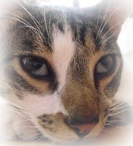 Terza Palpebra nel Gatto