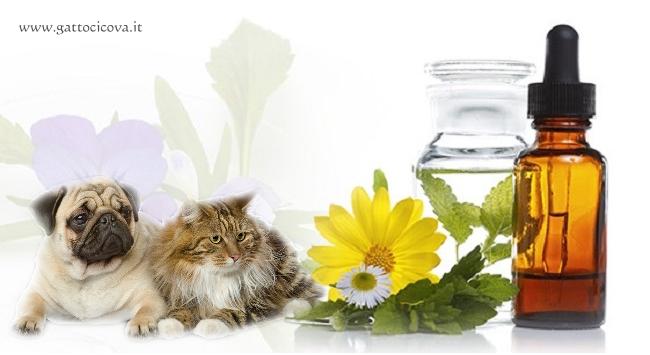 Uncastim nel Gatto e nel Cane