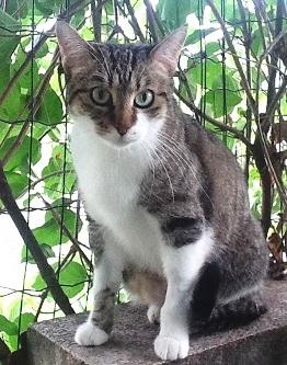 gatto-con-neoplasia-linfoide