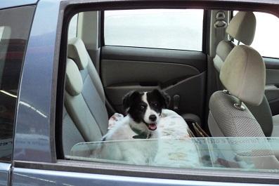 in-viaggio-col-cane