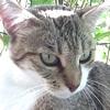 Neoplasia Linfoide nel Gatto