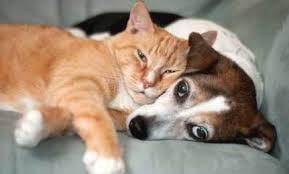 Cure Naturali Malassorbimento Gatto Cane