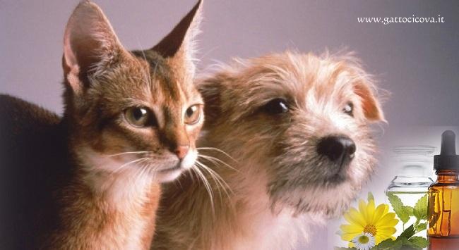 Rachitismo nel Gatto e nel Cane