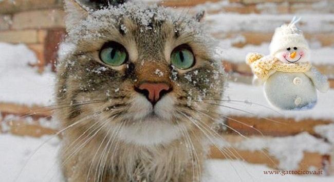 il Gatto e la Neve