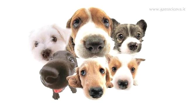 Patologie dei Cani di Razza