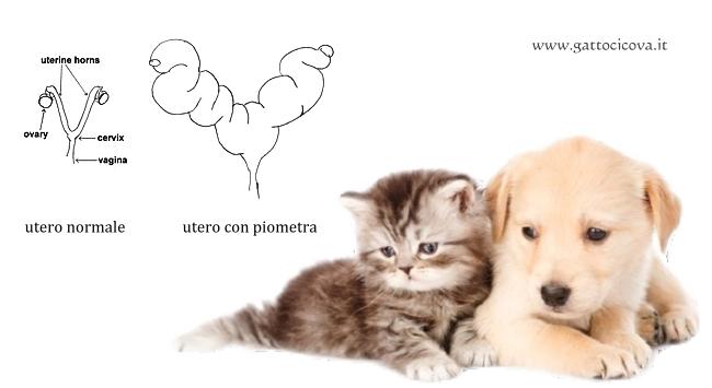 Piometra nel Gatto e nel Cane