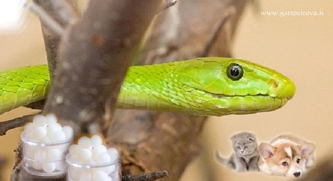 Veleno dei Serpenti in Omeopatia